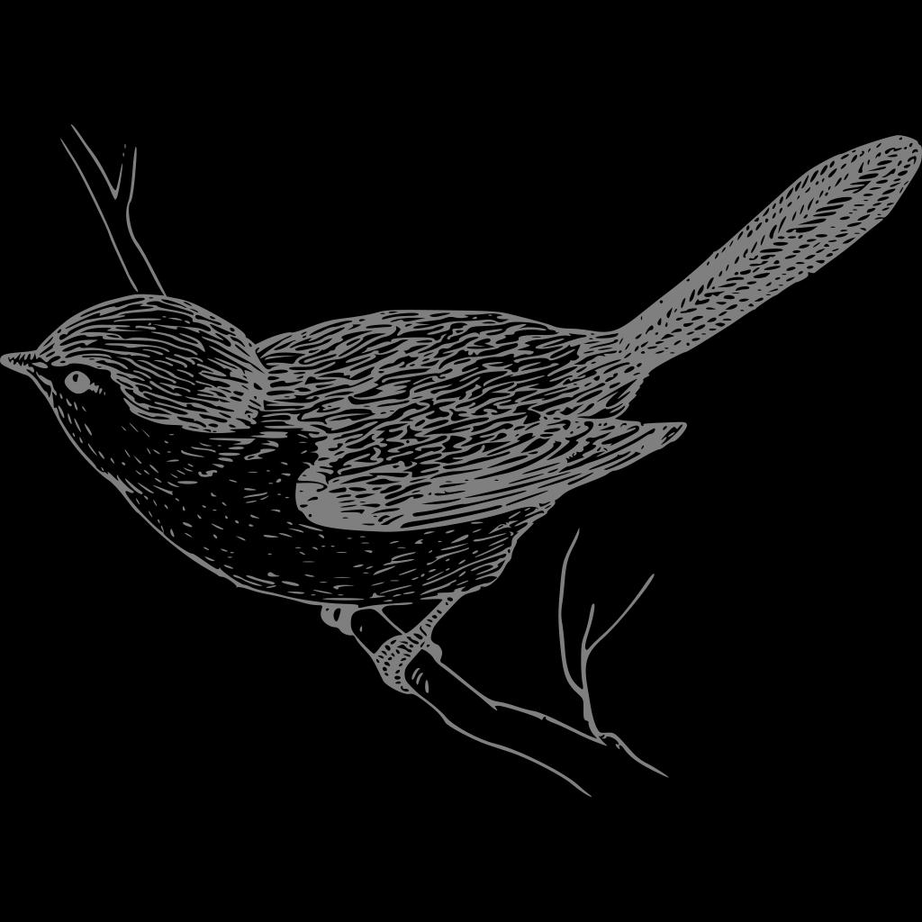 Bird On Branch SVG Clip arts