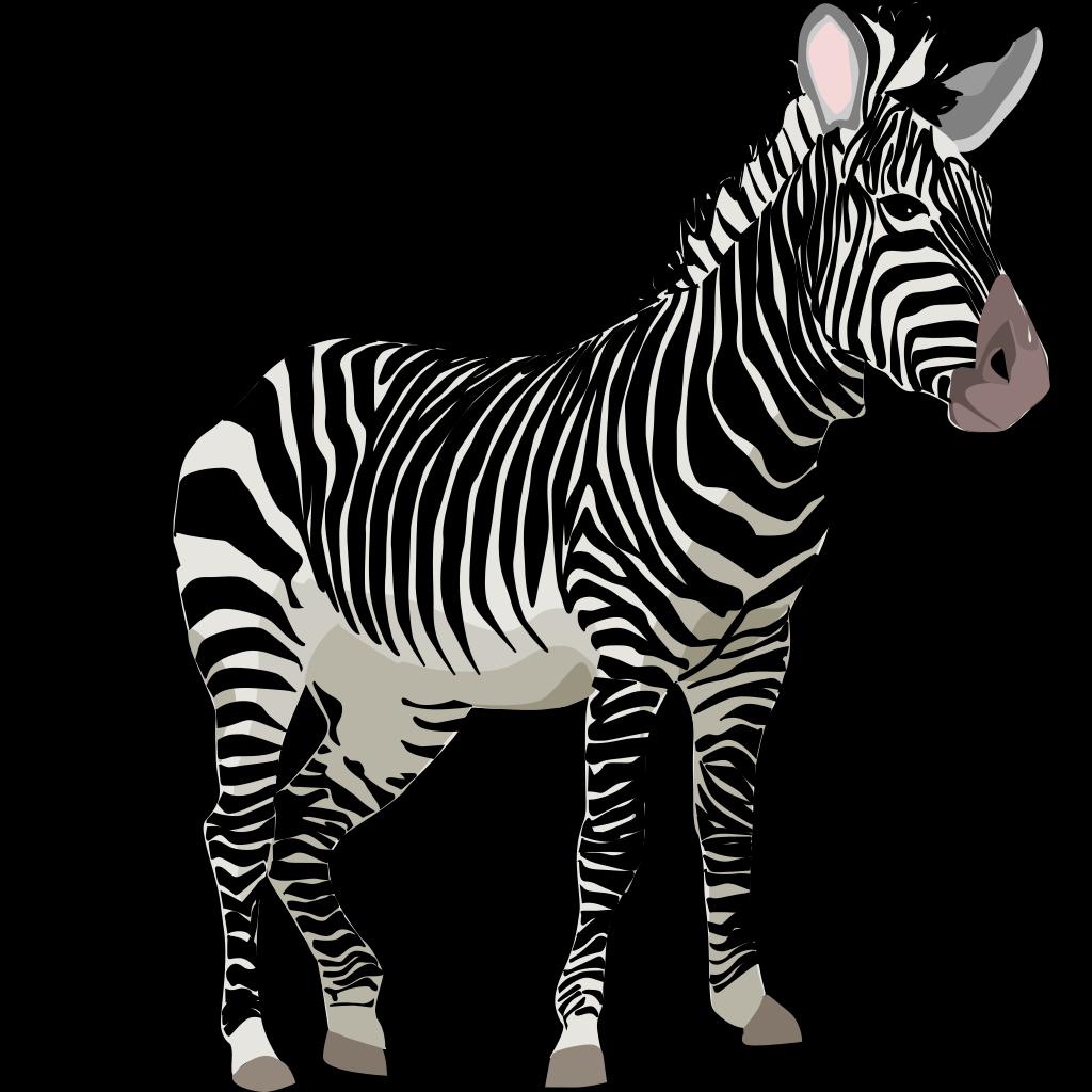 Zebra 3 svg