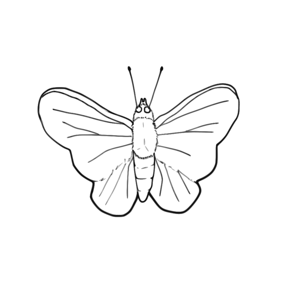 Butterfly (line Art) SVG Clip arts