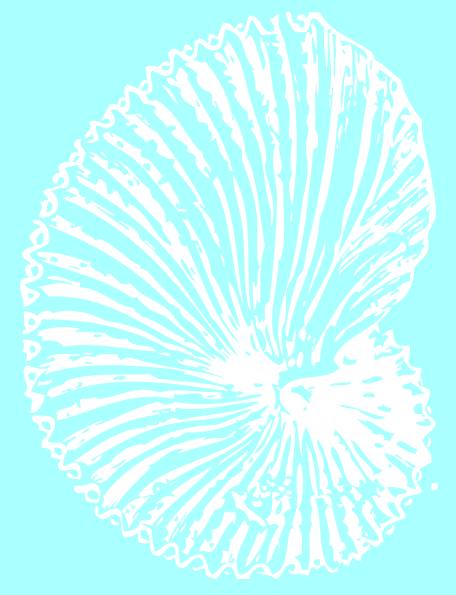 Sea Shell SVG Clip arts