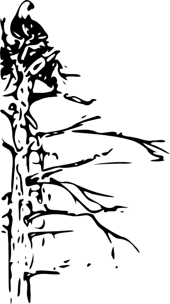 Bald Eagle Clip art - Animal - Download vector clip art online
