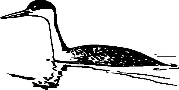 Western Grebe SVG Clip arts