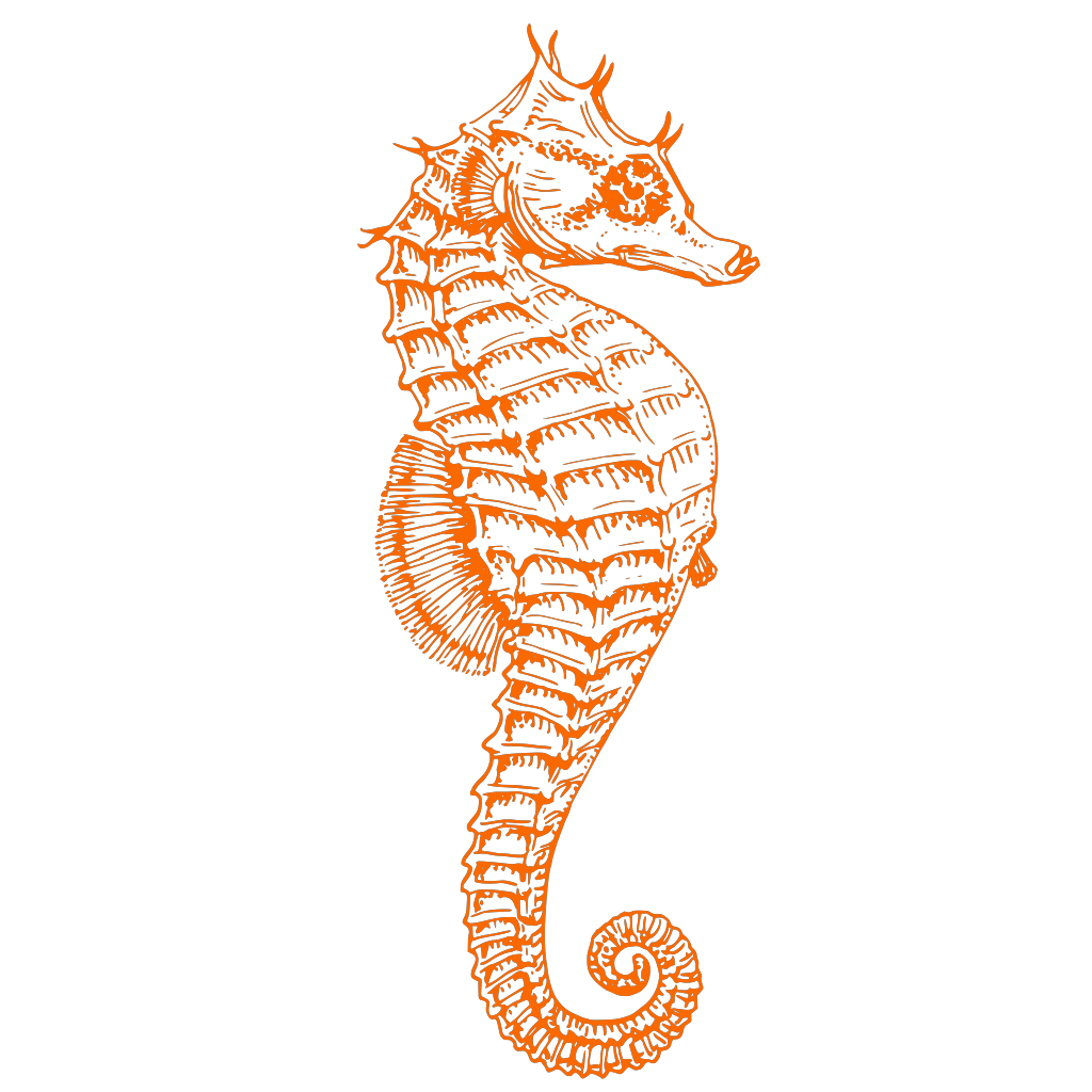 Seahorse Orange SVG Clip arts