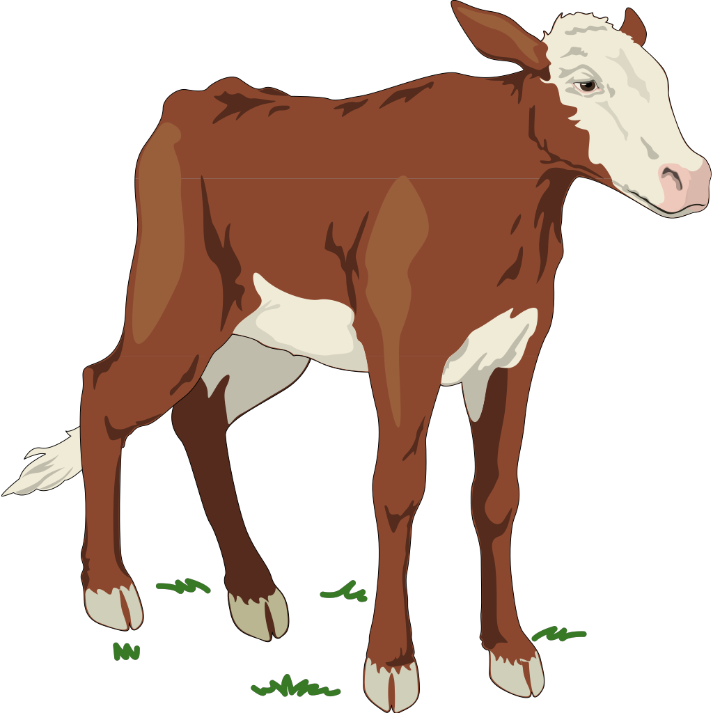 Brown And White Baby Cow SVG Clip arts