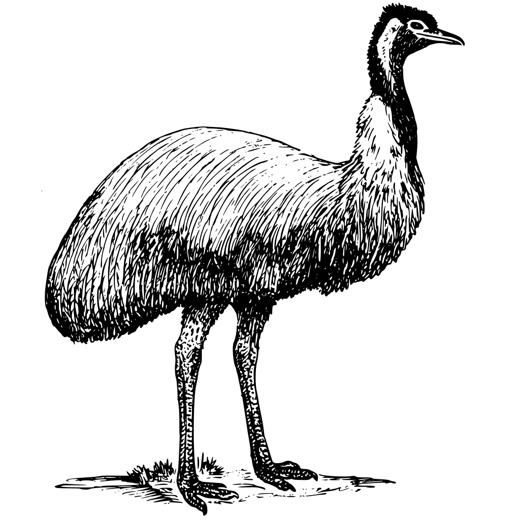 Emu Animal Bird SVG Clip arts