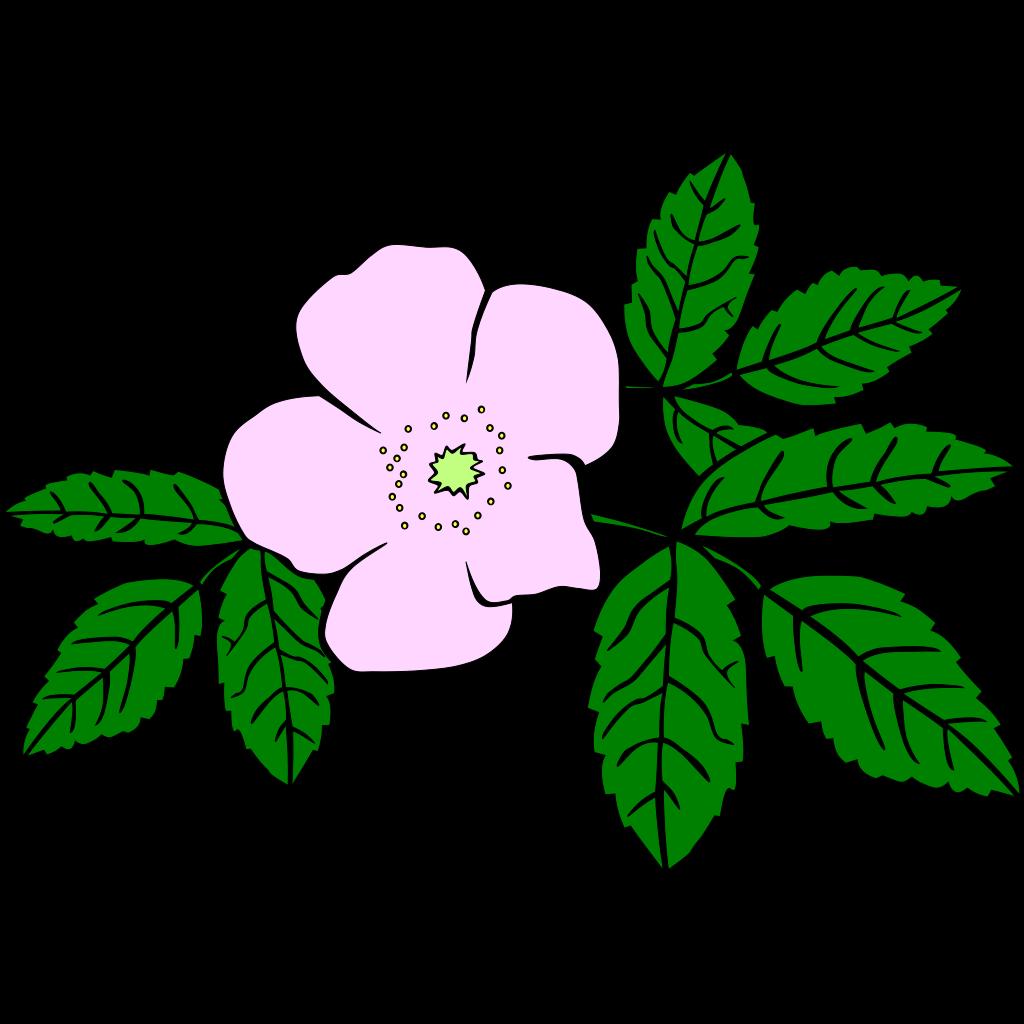 Rose 4 SVG Clip arts