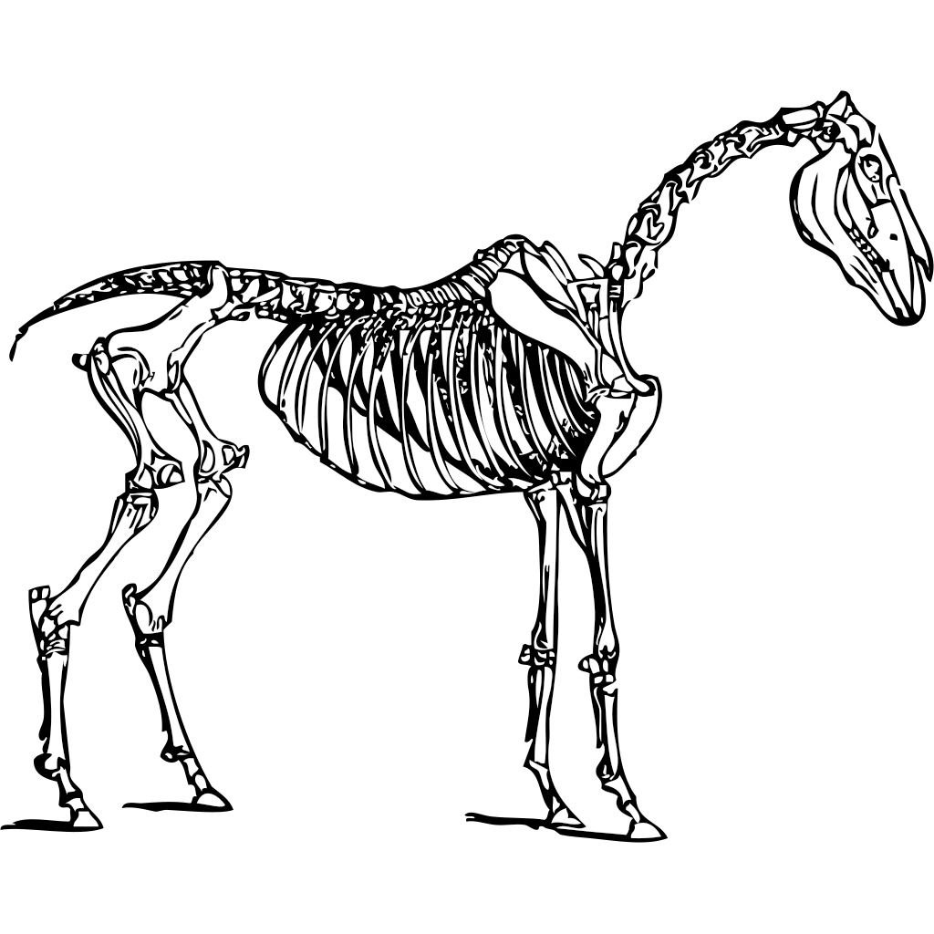 Horse Skeleton SVG Clip arts