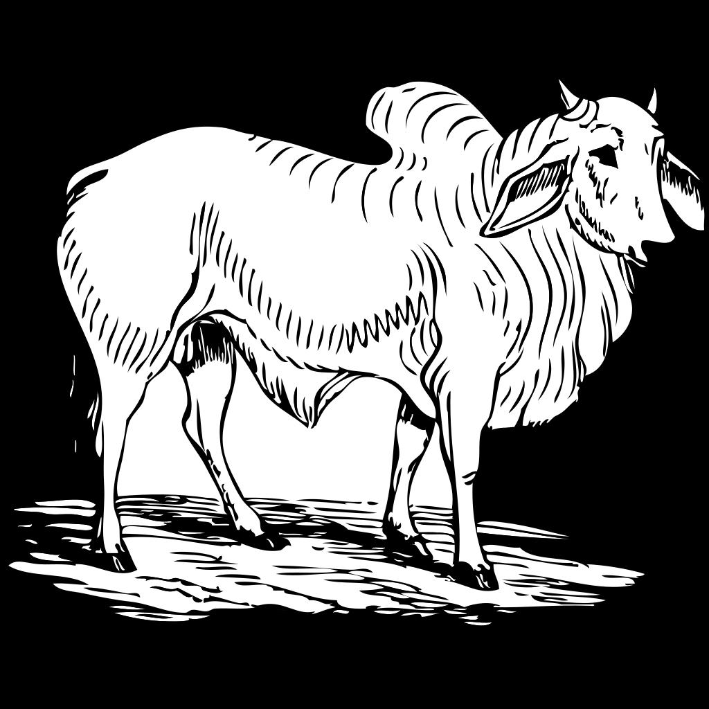 Brahma Bull SVG Clip arts