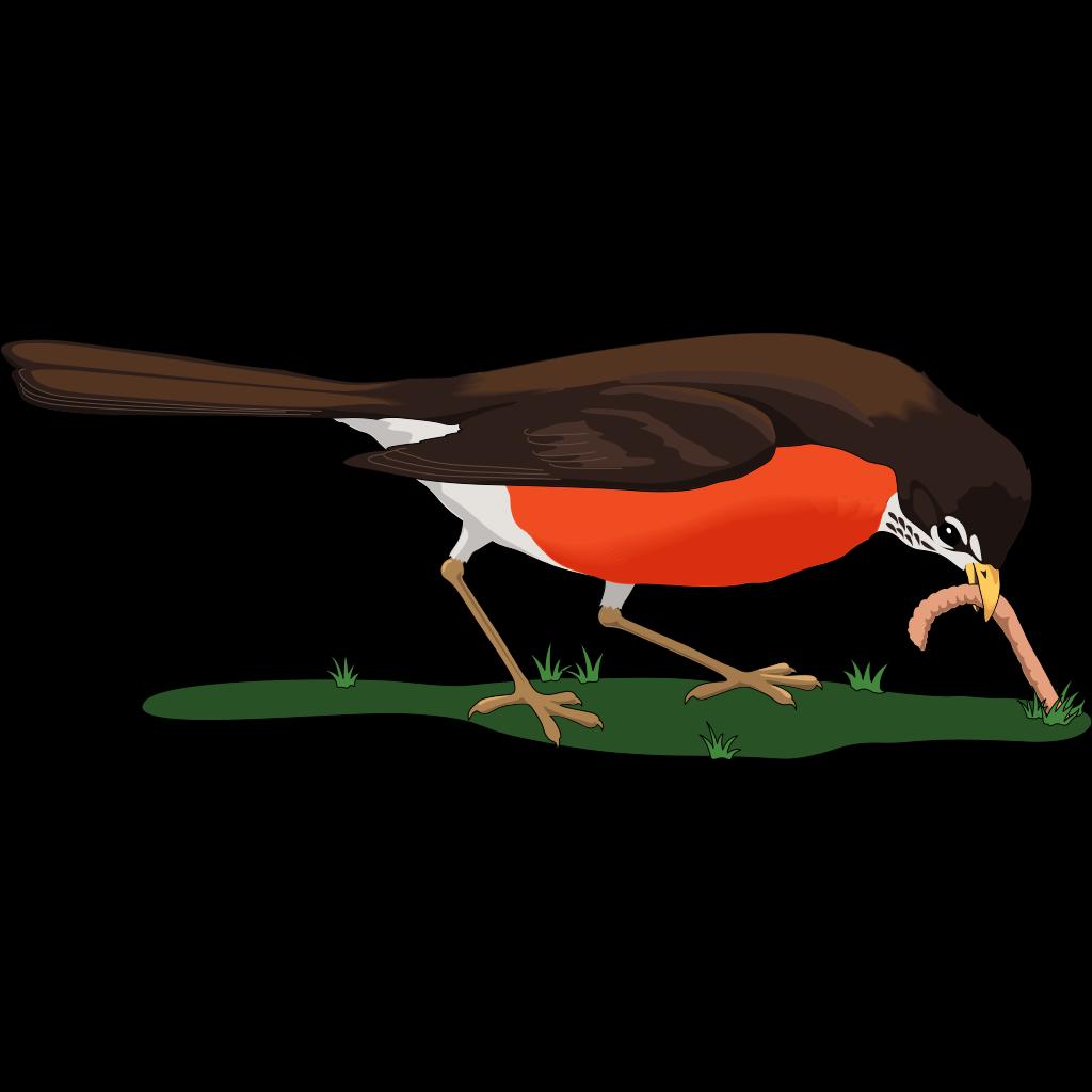Bird Eating Worm SVG Clip arts