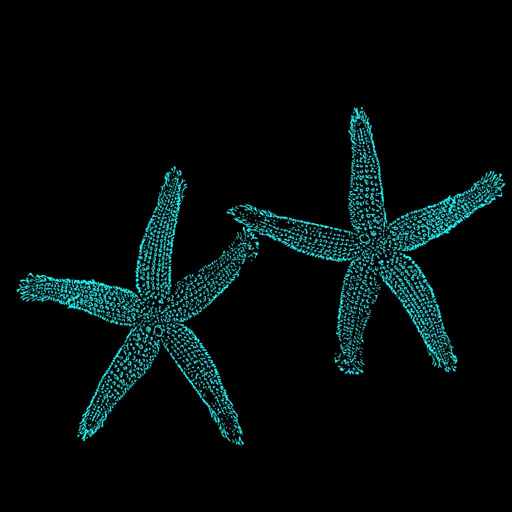 Aqua Blue Starfish SVG Clip arts