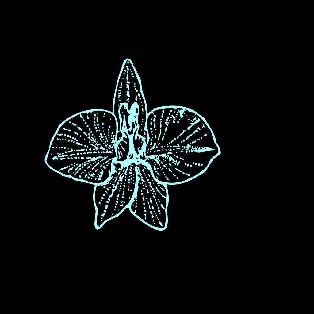 Blue Orchid   Clip Art SVG Clip arts