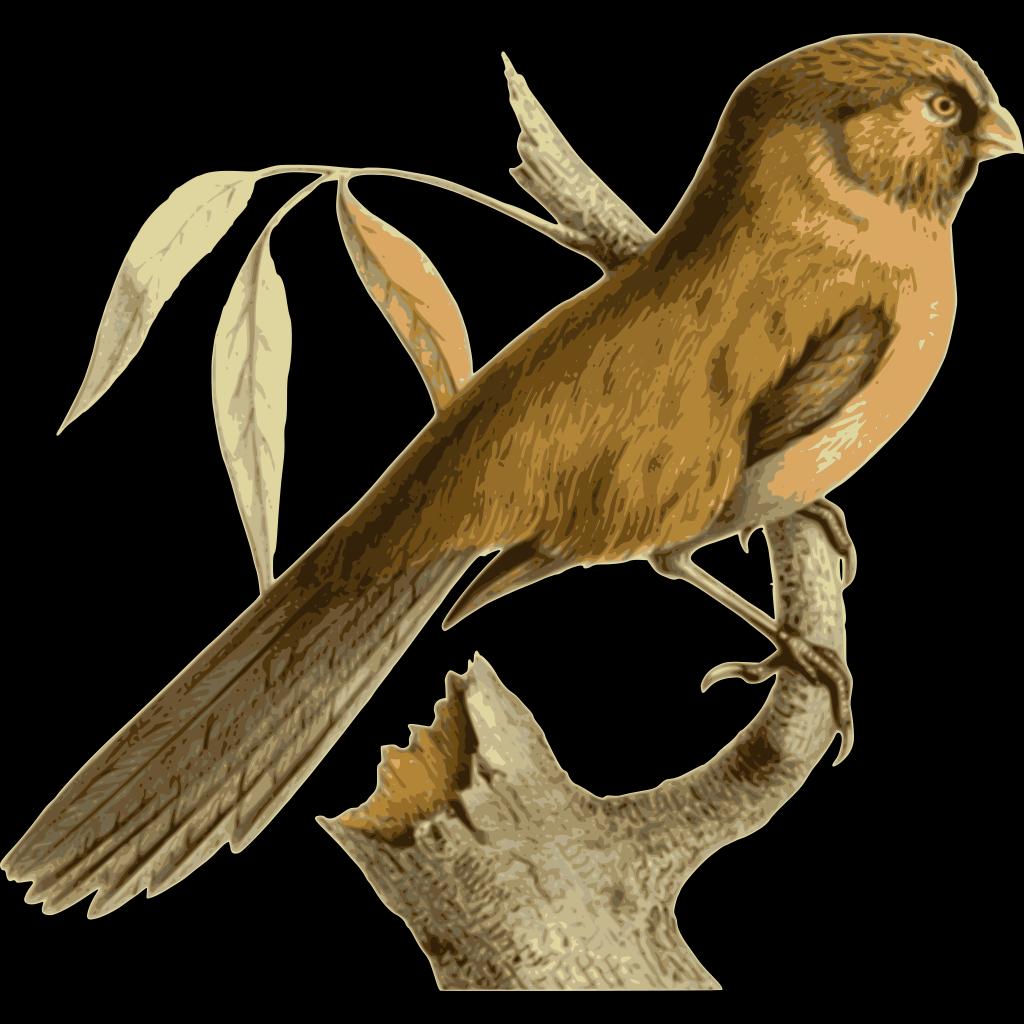 Paradoxornis Unicolor SVG Clip arts