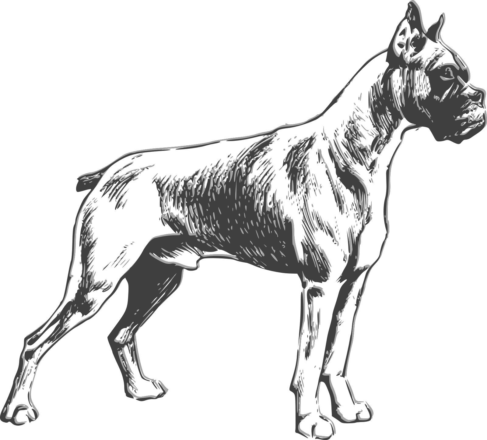 Dog SVG Clip arts