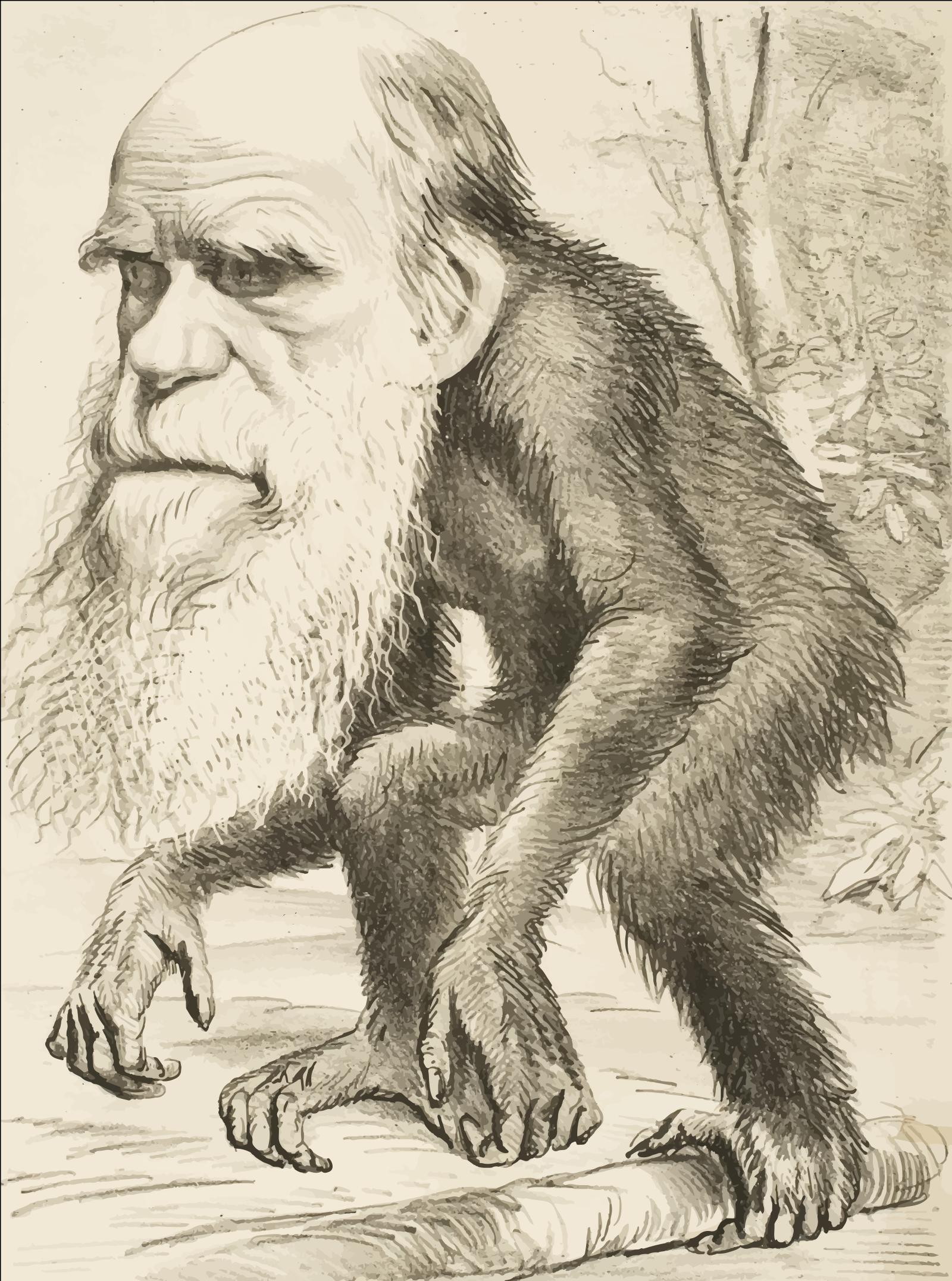 Brown Ape SVG Clip arts