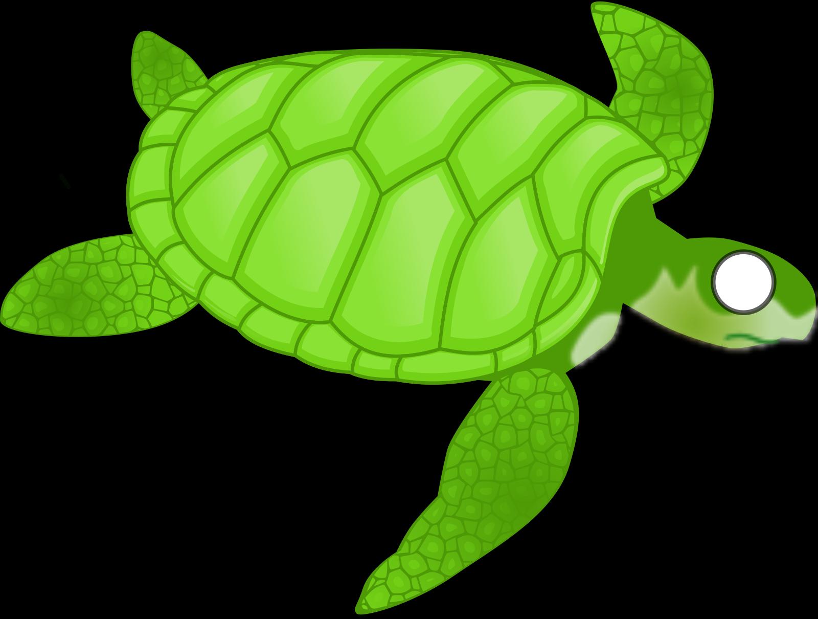 Turtle SVG Clip arts