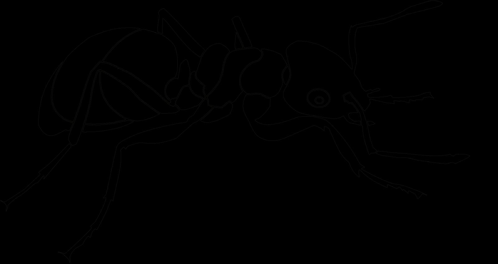 Ant SVG Clip arts