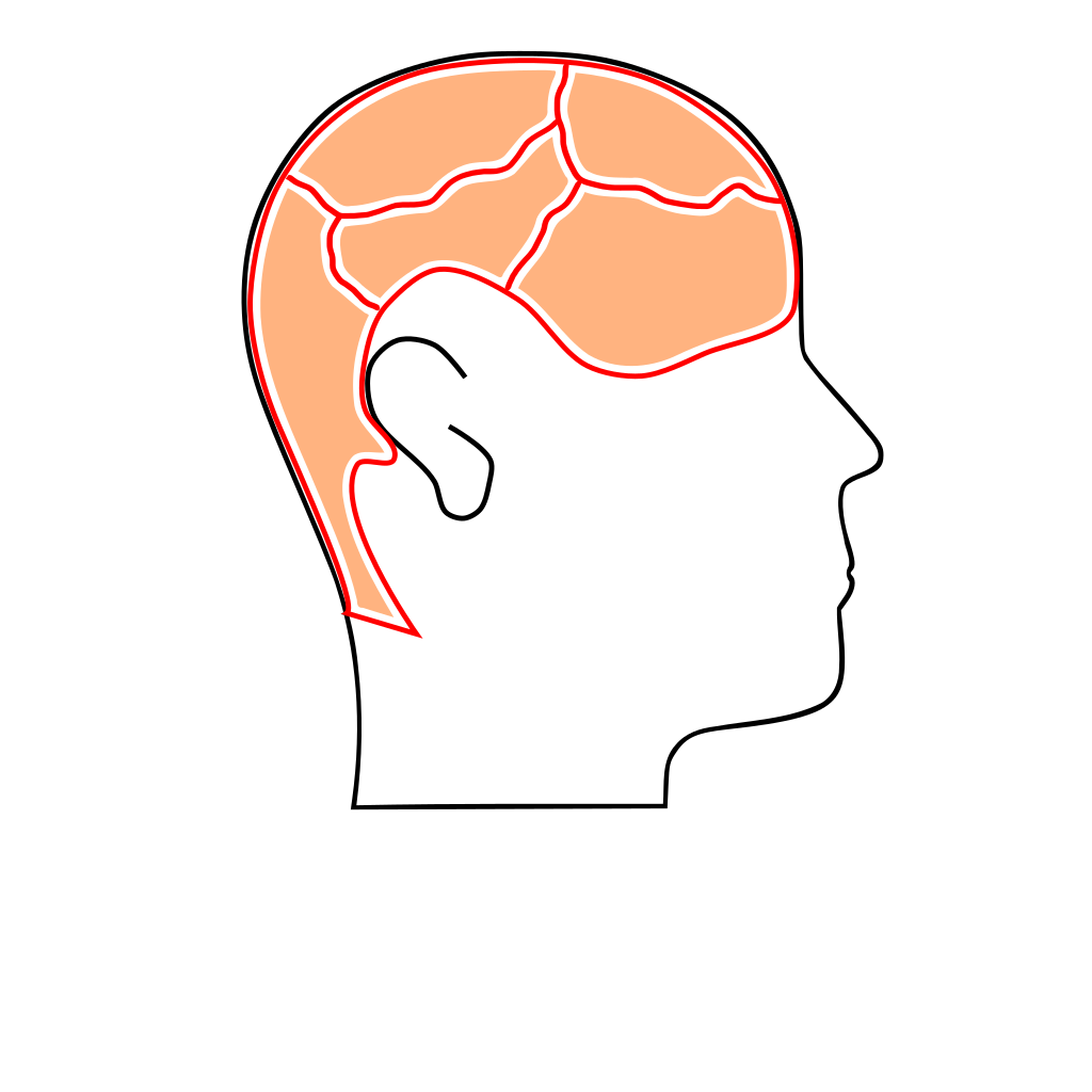 Brain Sections SVG Clip arts