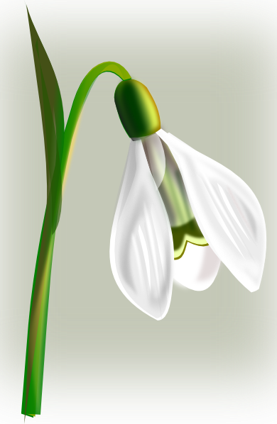 Snow Drop SVG Clip arts