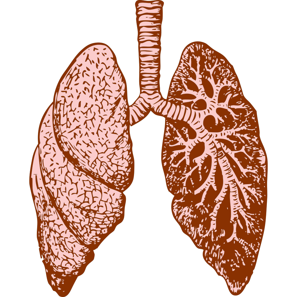 Lungs SVG Clip arts