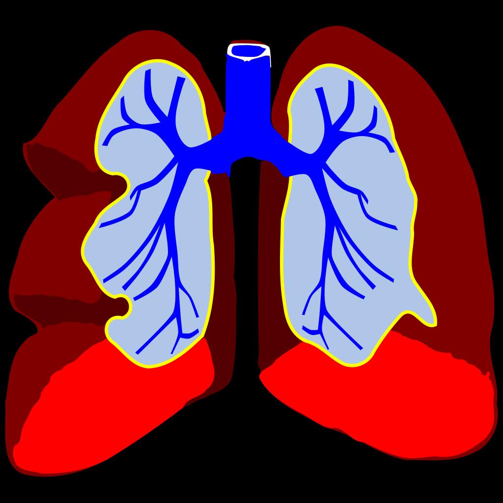 Healthy Lungs SVG Clip arts