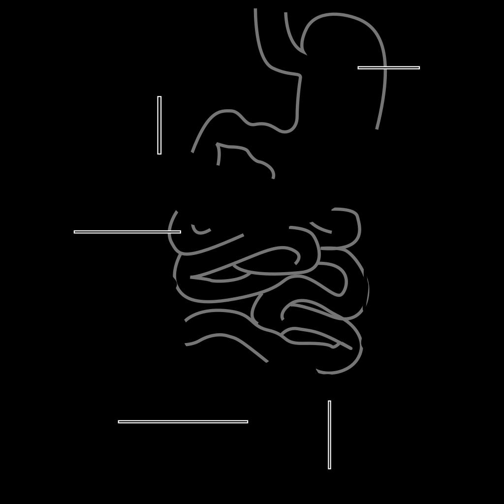 Intestine Diagram SVG Clip arts