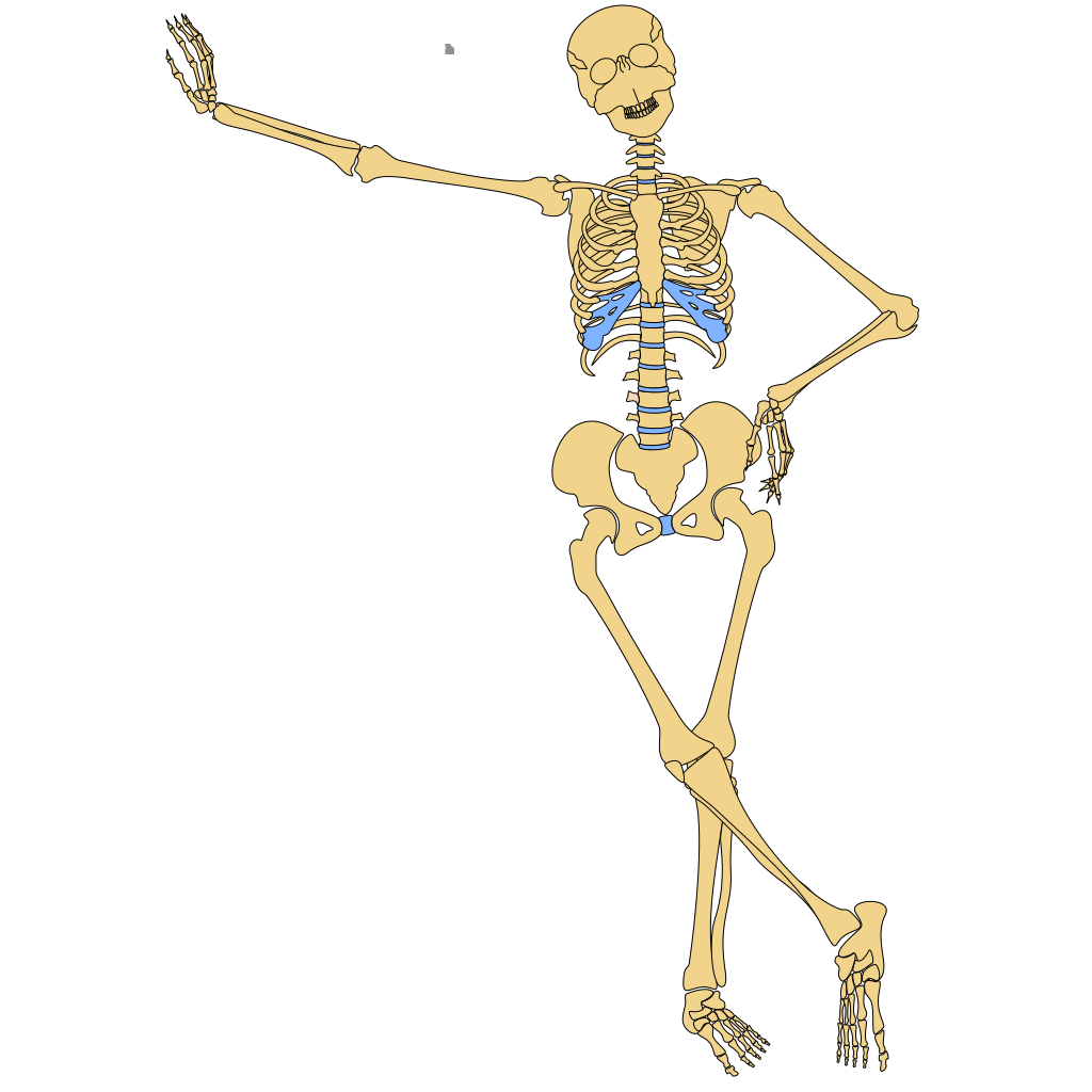 Human Skeleton Outline SVG Clip arts