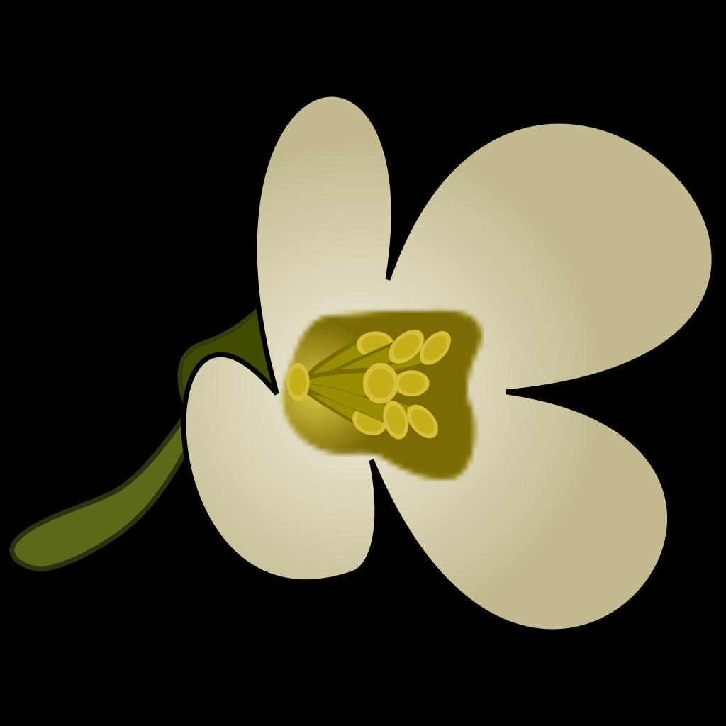 Thaliana Flower SVG Clip arts