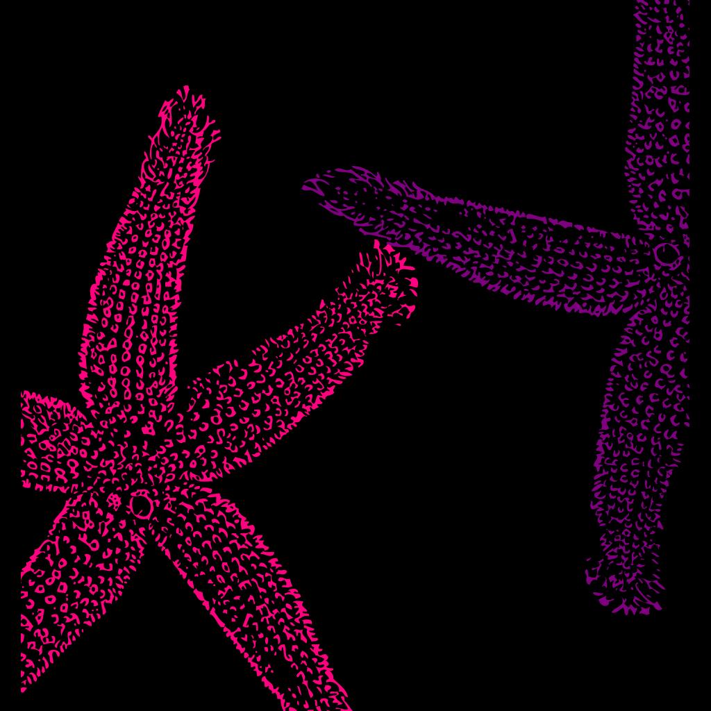 Turquoise Starfish SVG Clip arts