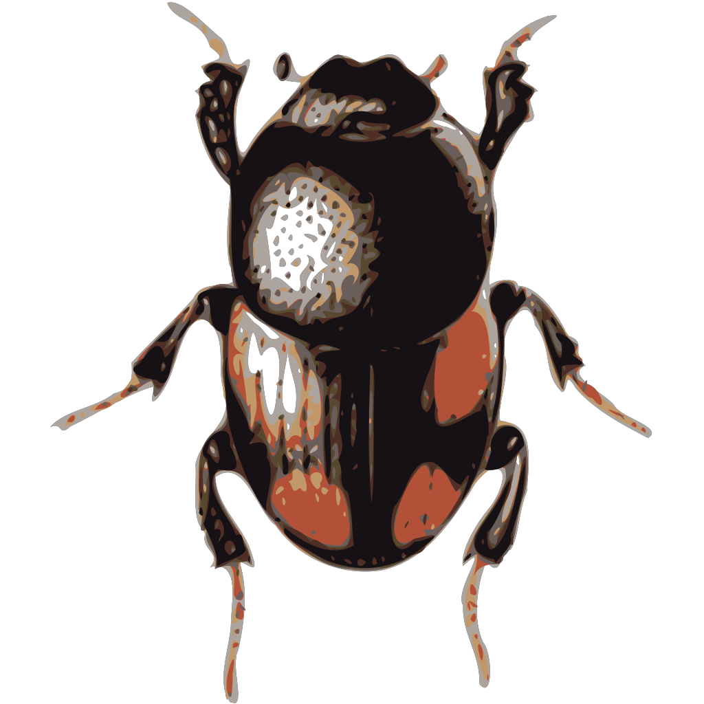 Insect Beetle svg