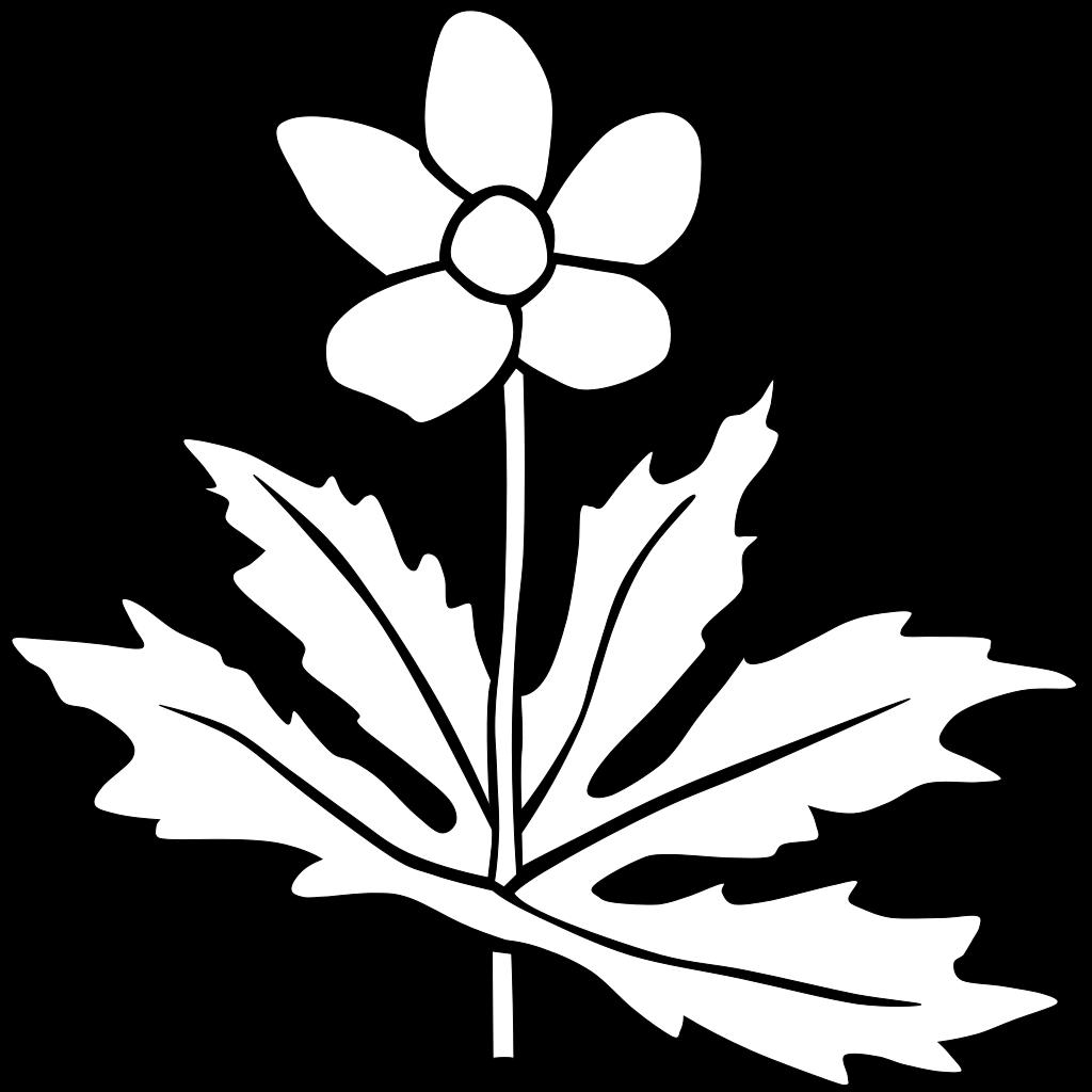 Canada Anemone Coloring Page SVG Clip arts