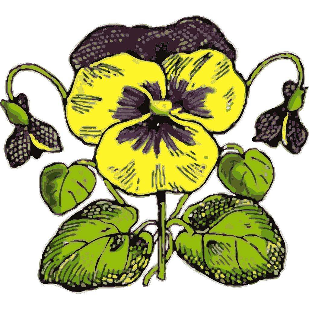 Pansy Illustration With Color SVG Clip arts