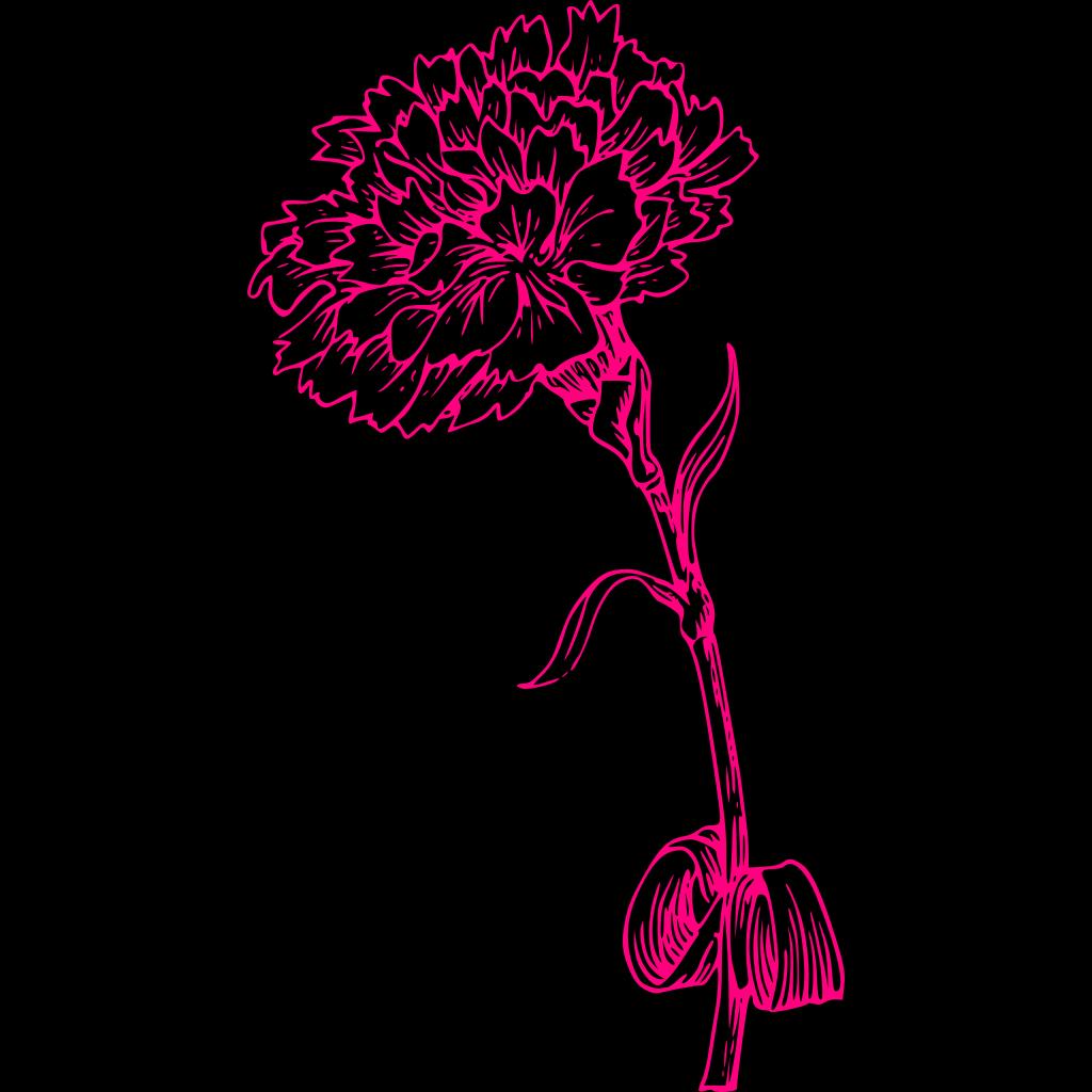 Pink Carnation SVG Clip arts