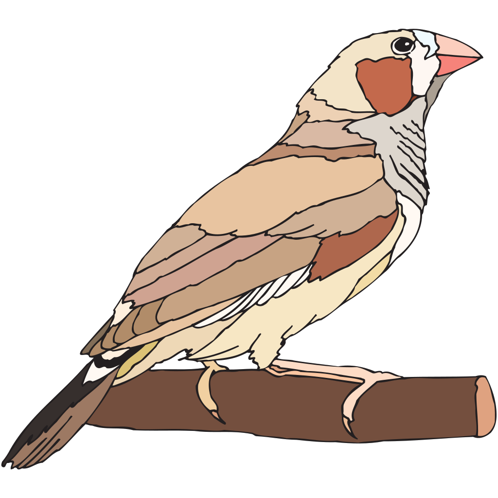 Zebra Finch SVG Clip arts