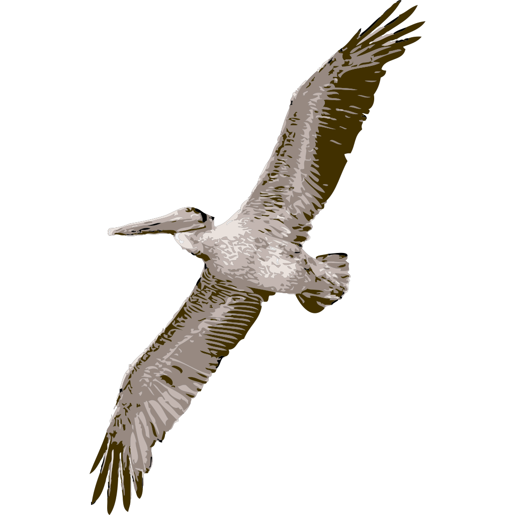 Pelican Flying SVG Clip arts