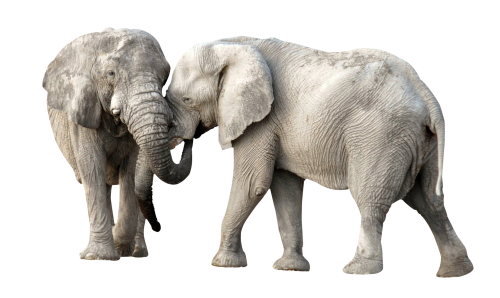 African Elephant PNG Transparent Image SVG Clip arts