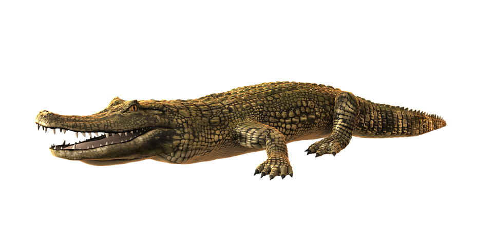 Alligator PNG Photo SVG Clip arts