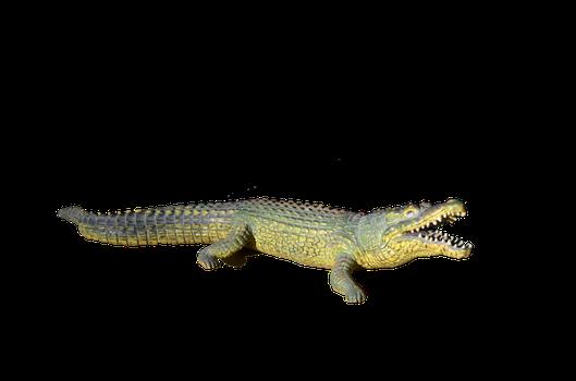 Alligator PNG Photos SVG Clip arts