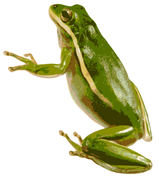 American Green Tree Frog PNG SVG Clip arts