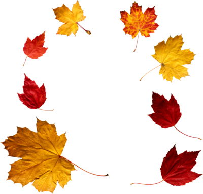 Autumn Leaf PNG SVG Clip arts