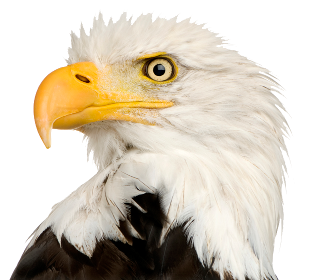 Bald Eagle PNG Transparent SVG Clip arts