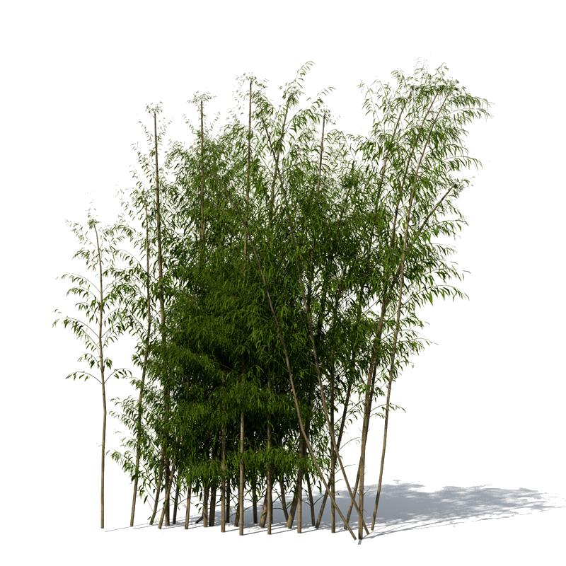 Bamboo PNG File SVG Clip arts