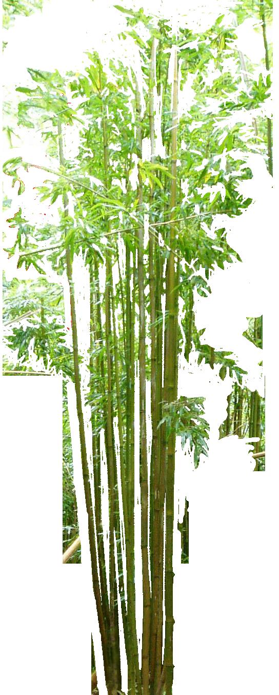 Bamboo PNG Image SVG Clip arts