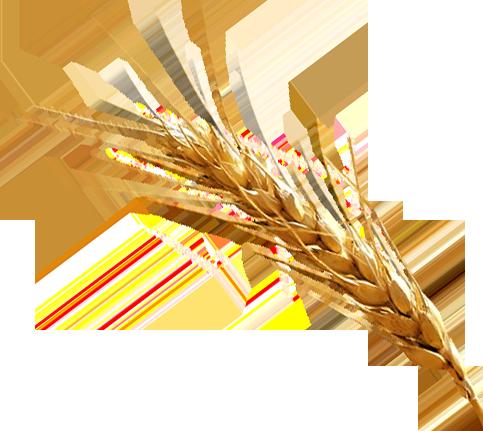 Barley PNG Clipart SVG Clip arts