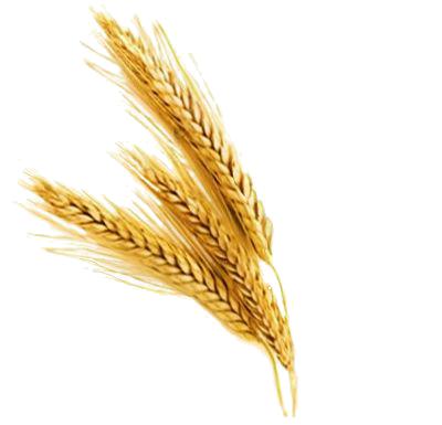 Barley PNG File SVG Clip arts