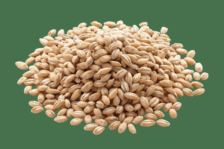 Barley PNG Image SVG Clip arts