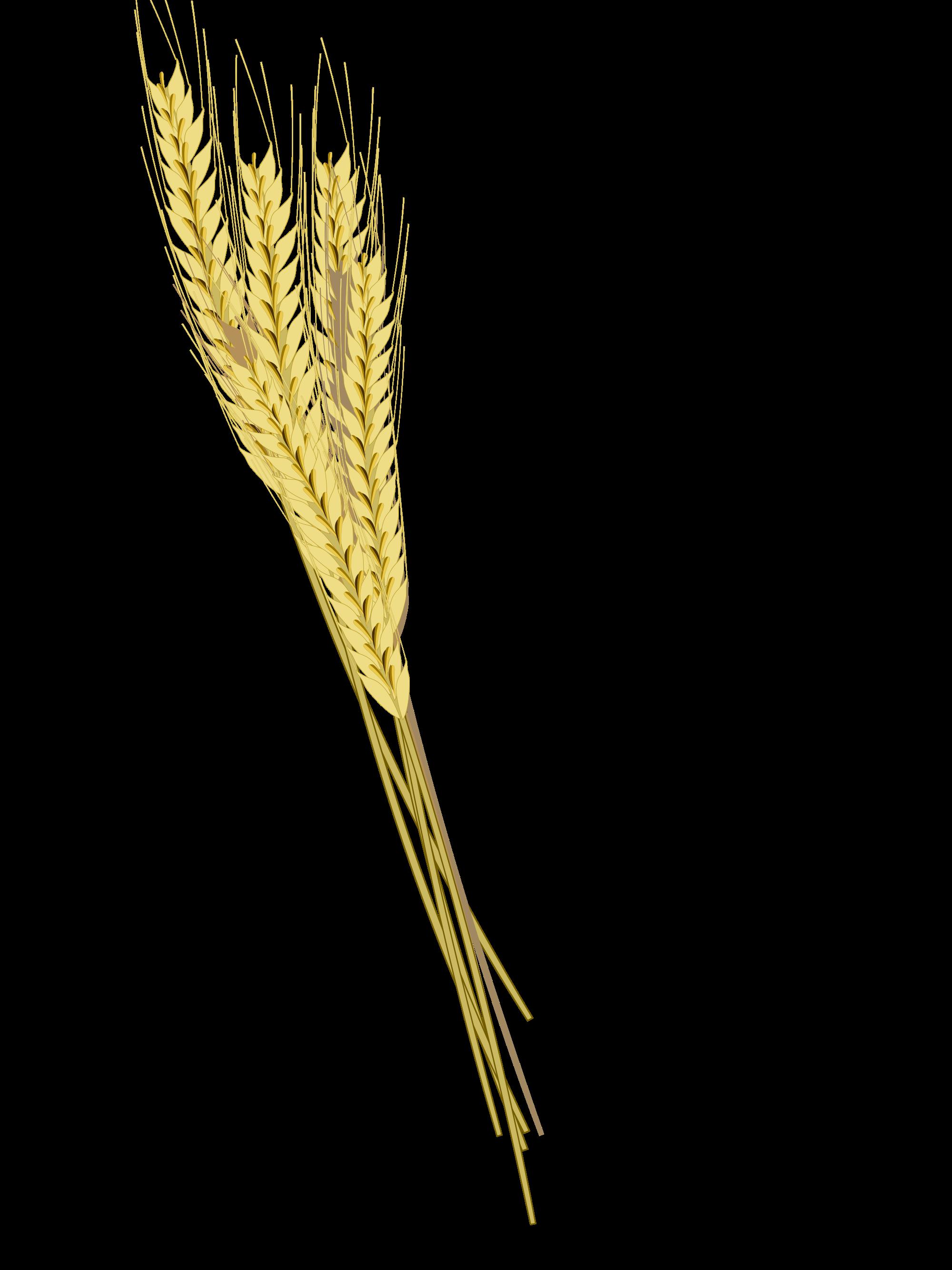 Barley PNG Photos SVG Clip arts