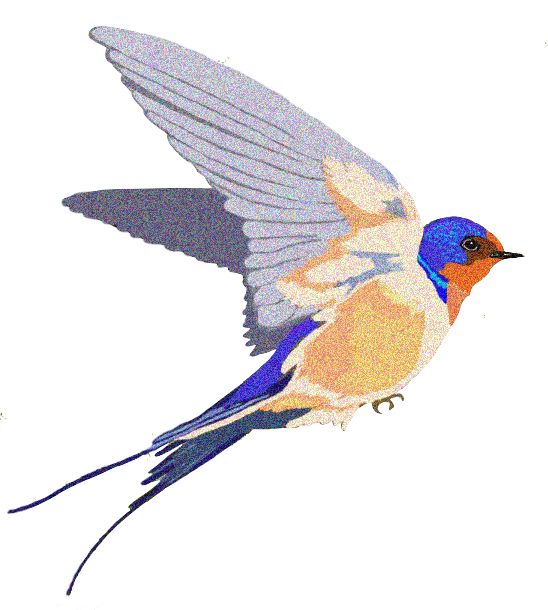 Barn Swallow Background PNG SVG Clip arts