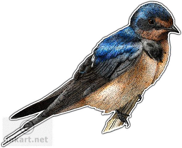 Barn Swallow PNG File SVG Clip arts