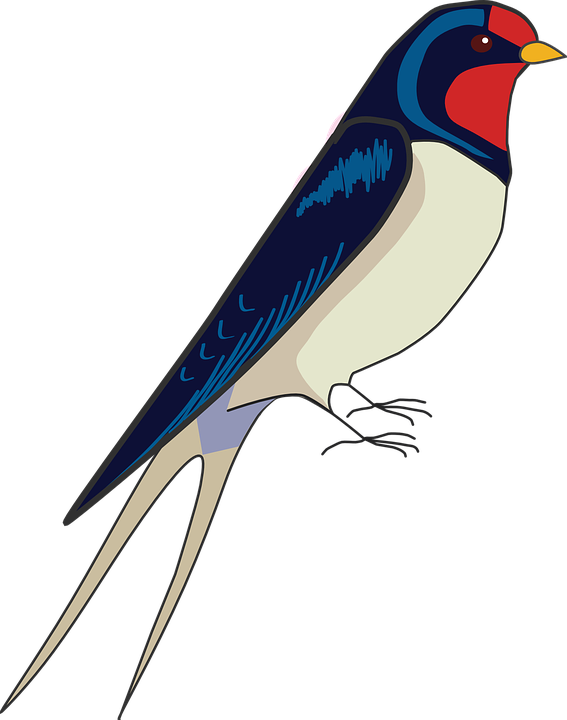 Barn Swallow Transparent Images PNG SVG Clip arts