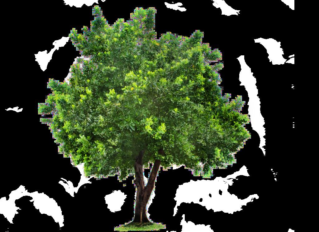 Beautiful Tree PNG SVG Clip arts